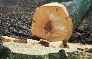 dessouchage d'arbre Rochefort