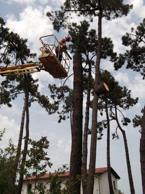Abattage arbres littoral elagage ol ron 17 for Entretien jardin oleron