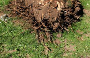 Dessouchages d'arbres St Just