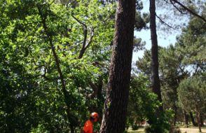 Abattages d'arbres 17