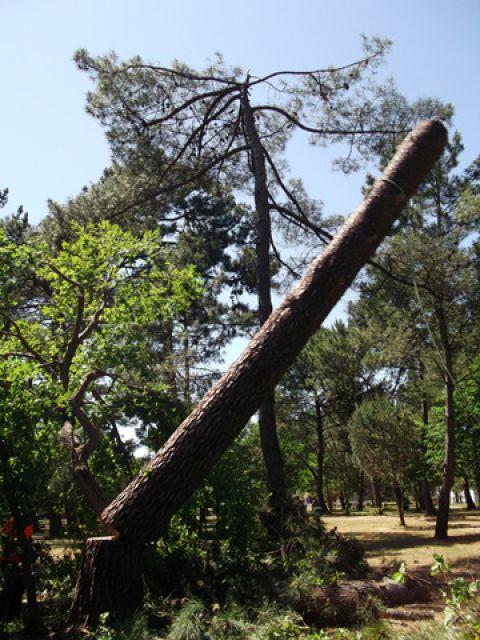 Elagage abattage taille d 39 arbres littoral elagage for Entretien jardin oleron