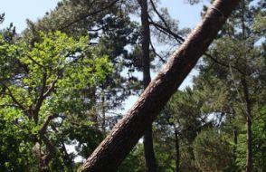 Abattages d'arbres ile d'Oleron