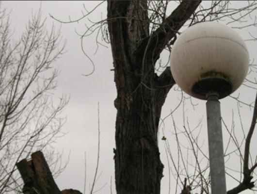 Abattage arbres dangereux avec champignons