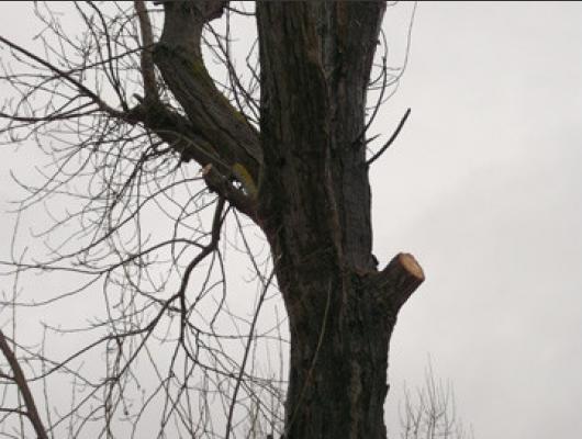 nos chantiers abattage arbres dangereux avec champignons ol ron st just la tremblade. Black Bedroom Furniture Sets. Home Design Ideas