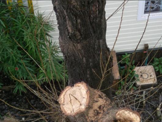 Nos chantiers abattage arbres dangereux avec for Entretien jardin oleron