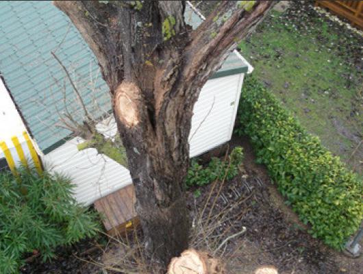 abattage arbre oleron