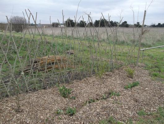 Brf – bois rameaux fragmentes-epandage pour mettre aux pieds des plantations