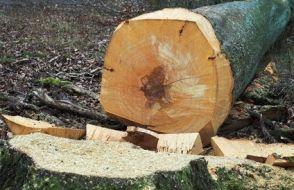 abattage d'arbre 17